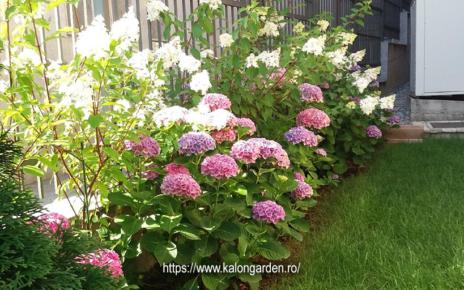 intretinerea gradinii cu flori